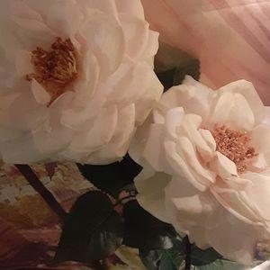 3/$25 Roses